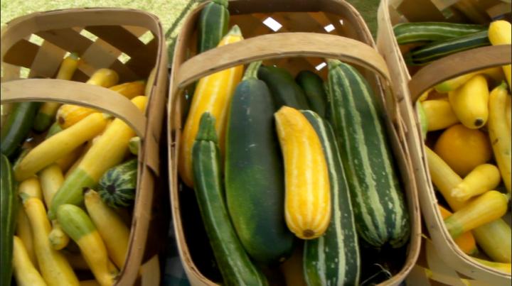 Squash:Zucchini