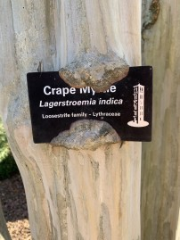 Tree Tag on Tree